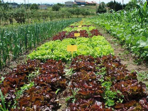 Planificar el huerto acorde al espacio blog cocopot for Huerto y jardin