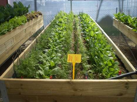 Asociaci n de cultivos lo b sico blog cocopot huerto y for Mesas de cultivo grandes